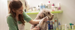 Woman clipping a dog's hair at her small business while thinking about how o build small business credit