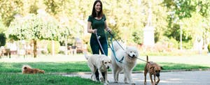 Young woman working a part-time job as a dog-walker, happy that she has multiple sources of income.