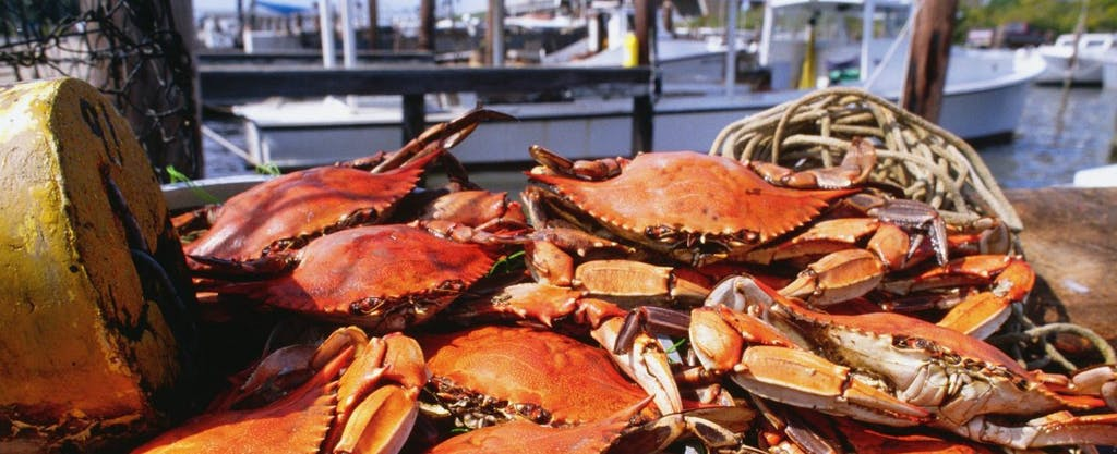 A pile of bright, red crabs with a boat and marina in the background. The state of Maryland is famous for its crabs and fishermen are subject to Maryland state tax just like other residents of the state.