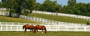 Two horses graze in a green pasture surrounded by white fence, trees and blue sky in Kentucky, where the Kentucky state income tax is a flat rate.