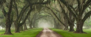 Towering live oaks, draped in Spanish moss, line the driveway of a plantation outside Charleston, South Carolina, where residents may be subject to South Carolina state tax.