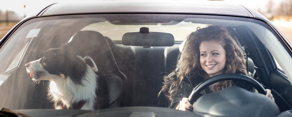 Woman driving her car with her dog sitting in the front seat