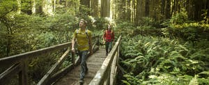 Two men hiking through a Redwood forest